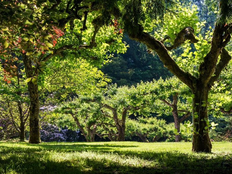 Lorsque l'on taille fortement un arbre, les risques de ruptures sont moins importants car sa prise au vent est réduite.